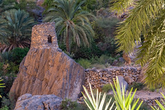 Old tower - Misfat Al Abriyeen (Lars Helge) Tags: old trees building tree tower rock stone architecture fuji 4 ngc x palm palmtree arabia arabian oman oldtown fujinon oldcity oldhouses xseries 2015 alhamra 18135 misfat oldtower xt1 misfah misfatalabriyeen alabri  misfatalabreen fujixt1 fujinonxf18135mmf3556rlmoiswr aldhakhiylagovernorate