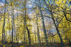 Hilton Area (11-10-16)-082 (nickatkins) Tags: fall fallcolors fallcolor fallfoliage autumn water sun sunlight stream
