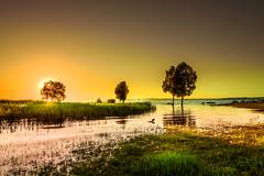 The dying of the Light (marco soraperra) Tags: sun sunset sunlight light sky shadow grass water sea lake tree boat silhouette landscape nikon nikkor summer skyline yellow