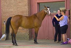 Fanning The Horse (swong95765) Tags: horse fan women people animal beautiful alert contestant statefair