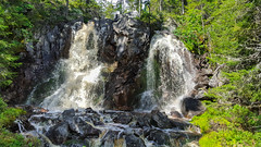 20160811_123829-1 (Andre56154) Tags: schweden sweden sverige wasser water bach flus river stream pflanze wasserfall waterfall tree wald forest
