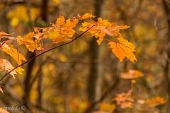 Fall's ghosts (catoledo) Tags: 2010 hawkmountain pennsylvania fall kempton unitedstates us
