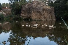 #Reflections_ducks (Jose Bellas) Tags: relax reflection reflect ducks spot mind water rive