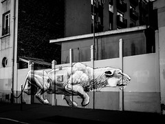 All cats are grey in the dark ... (martina.stang) Tags: night paris wallart montparnasse