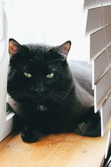 s m u d g e (technicolor dreams) Tags: cat black animals pets indoors window portrait light cute green eyes dof canon t3 1100d 60mm