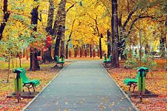 (Alin B.) Tags: alinbrotea nature autumn city parc park tree rusty rust september october targujiu
