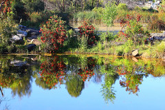 2016-10-18 Park Central (Ggreybeard) Tags: water lake campbelltown nsw australia