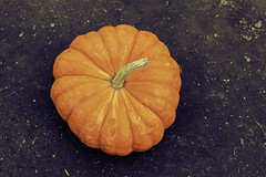 Pumpkin from Above (A Great Capture) Tags: agreatcapture agc wwwagreatcapturecom adjm toronto on ontario canada canadian photographer northamerica ash2276 ashleylduffus ald mobilejay jamesmitchell fall autumn automne herbst 2016 pumpkin october gourd stem ground earth dirt