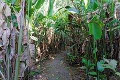 Na wyspie małp | Monkey Island
