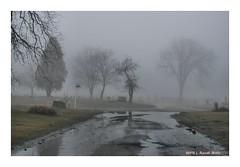 wetness (TooLoose-LeTrek) Tags: cemetery fog mist haze wet water gloomy tree