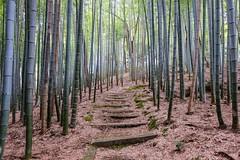 Adashino Nenbutsuji VI (Douguerreotype) Tags: shrine temple buddhist kyoto japan stairs steps bamboo