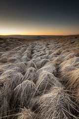 moorland-frost (dannyhow2011) Tags: frost hawfrost ice winter chill landscape marsden moorland marsdenmoor nationaltrust nature pulehill