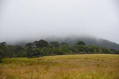 DSC_3256 (UdeshiG) Tags: mountain hike hillcountry teaestate mist sambar eagle hortonplains ohiya sunrise sky haputale nikon trek adisham