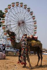 All Decked Up!!! (bhavit.godiwala) Tags: pushkar pushkar2016 camelfair camels rajasthan ngc twop nikon bhavit fair