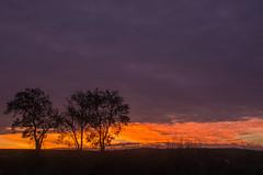 Ja surt el Sol a Puigconill | Santa María de Montmagastrell (Ramon Oromí Farré [calBenido]) Tags: santamariademontmagastrell urgell urgellejant tàrrega planadurgell planadelleida lleida nikon d7100 tamron matinada jasurtelsol madrugada alba albada catalunya españa es cel cielo sky núvols nubes clouds arbres árboles trees puigconill morning sunrise dawn europa europe païsoscatalans clarejar amanecer colours colores colors taronja carabassa naranja orange pelscamins meteio meteologia ennuvolat nublado cloudy tardor otoño autumn december diciembre desembre landschaft paisatge paisage landscape natur nature naturaleza natura naturalesa paysage flickr sunshine wheater clima sunlight automne