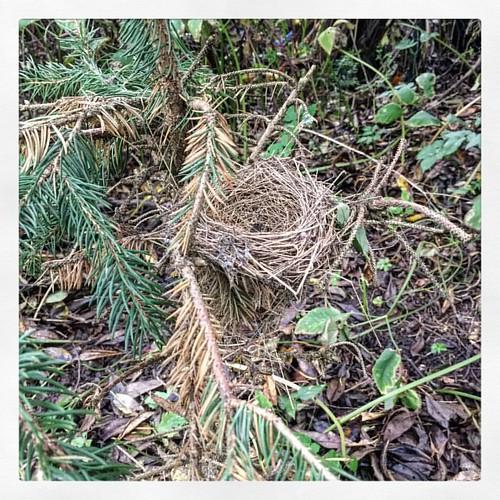 306/365 Nächstes Mal könnt ihr euch ja gleich noch einen größeren Baum 🌲 suchen ;) #wp #photo365 #bilsbekblog #iphoneography #iphone6 #photooftheday #sorcerer86 #igers #ig_europe #ig_germany #igersdollrottfeld