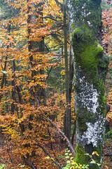 Eslovenia-2016-311 (Jos Manuel Garcs) Tags: lo cerknica eslovenia si