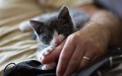 Catmoments (petragruhn) Tags: portos katze cat tierportrt tier