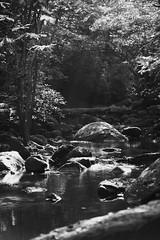 Oct2016 South Mtn State Park 19 (furrycelt) Tags: jacobsforkriver jacobsfork nikon85mmf14afd nikon85mmf14 northcarolina southmountainstatepark southmountains blackandwhite ianwilson jianwilson photographersoftumblr 85mm d600 nc nikon october autumn fall forest furrycelt leaves lensblr monochrome natural nature river rocks sunlight trees water woods