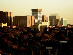 Urban jungle (Finepixtrix) Tags: sunset johannesburg jozi trees buildings forest jungle concrete urban