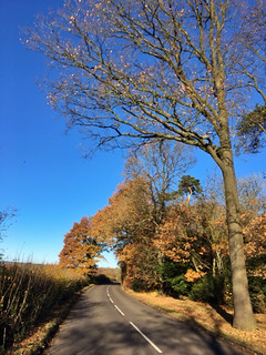 Autumnal oak trees on Four Ashes Road, Nr High Wycombe