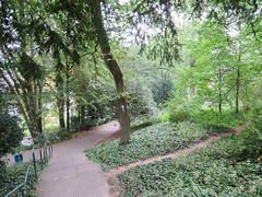 IMG_5521 (jaglazier) Tags: 2016 91716 bielefeld copyright2016jamesaglazier deciduoustrees germany ivy northrhinewestphalia paths september trees forests gardens parks plants nordrheinwestfalen