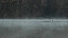 Airone Bianco Maggiore - Ardea Alba (M K S v i d e o - p h o t o g r a p h y) Tags: ardeaalba greategret aironebiancomaggiore bandella riservanaturaledellavalledellinfernoebandella marksoetebier canon video
