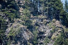 Trail to the top of Beacon Rock (maytag97) Tags: rock beaconrock washingtonstate trail monolith scaffolding hike maytag97 tamron 150 600 150600 climb outdoor washington