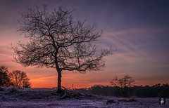 Cold as ice,..... (@FTW FoToWillem) Tags: surae brabant bos park nature natuur landscape landschap holland hollanda holandes nederland netherlands vorst winter winter2016 tree trees bomen boom zon zonsopkomst sun sunrise ftw fotowillem willemvernooy d7100 travel landmark natuurpark dorstnbr clouds cloud wolken silhouet silhouette