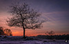Cold as ice,..... (@FTW FoToWillem) Tags: surae brabant bos park nature natuur landscape landschap holland hollanda holandes nederland netherlands vorst winter winter2016 tree trees bomen boom zon zonsopkomst sun sunrise ftw fotowillem willemvernooy d7100 travel landmark natuurpark dorstnbr clouds cloud wolken silhouet silhouette
