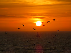 Sunset Flock (Kelson) Tags: sunset ocean california southerncalifornia southbay beach birds sailboat