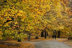 Central Park Gold (CVerwaal) Tags: autumn centralpark newyork ny usa trees sonyrx100iii