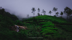 Munnar1-Travel Dairies (dtrajan) Tags: estates hillstation kerala munnar nature tea beauty bliss blues bushes clouds colors fog green greens india landscape light matte mist morning mountains outdoor photography plantation rock scenic skies south travel trees view water
