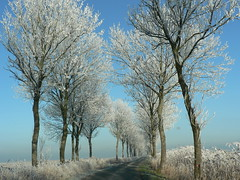 on the road again - Rheiderland (achatphoenix) Tags: rural road rheiderland roadtrip eastfrisia ostfriesland reif raureif backroad trees arbre baum white way seitenstrasen nebenstrasen lndlich