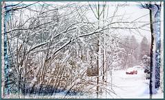 Premire tempte de neige 1er dcembre 2016 (Huguette T.) Tags: texture neige tempte snowstorm arbres qubec