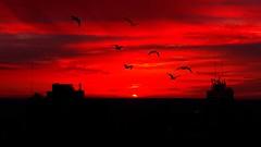 IMG_0524 Seagulls' silhouettes (Rodolfo Frino) Tags: mardelplata argentina gull gulls seagull seagulls gaviota fauna red sunset building buildings silhouette cloud clouds sun puestadelsol puestadesol ocaso anochecer atardecer mystic mistico dark gaviotas animal cityscape