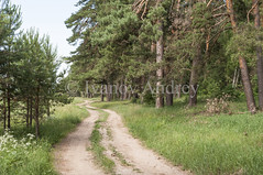 Summer road (Ivanov Andrey) Tags: pine plant grass bush bushes road trail tree trees woods forest crown curve green blue sky cloud clouds branch needles trunk bark shadows nature travel tourism landscape leisure midday sun vertical russia
