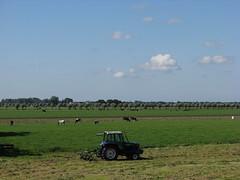 IMG_0062 (Momo1435) Tags: nederland groene hart alphen meije aarlanderveen ter aar