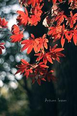 antumn leaves-1 (~) Tags: