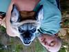 Robert Bateman's Cottage \ August 2015 (jmpershick) Tags: summer dog pets ontario canada dogs animals forest funny bat oasis haliburton batdog puggle funnydogs robertbateman canadiansummer canadianpainter jmpershick jessicapershick politemind