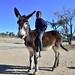 Boy on donkeys, Andriesvale, Kalahari, Northern Cape, South Africa