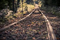 Tracks (Herr Olsen) Tags: autumn fall forest woods herbst tracks rails wuppertal wald gleise bmb schienen museumsbahn strasenbahn kaltenbachtal