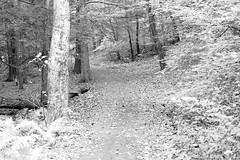 Serenity along the trail (bblhed) Tags: bw film geocaching kodak hiking letterboxing d76 girlscouts tmax400 watertown brownies nikonfa nikkor50mmf14 bluetrail homeprocessed mattatucktrail blackrockstatepark cfpa 64072 naugatuckrivervalley gc1b90j browniesmilecache wolverienscanner