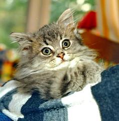 00377 (d_fust) Tags: cat kitten gato katze  macska gatto fust kedi  anak katt gatito kissa ktzchen gattino kucing   katje     yavrusu