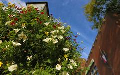 Utrecht, Ledig Erf (JoCo Knoop) Tags: utrecht ledigerf