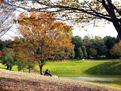 Campus in Autumn (ogawa san) Tags: autumn fall japan campus autumnleaves 日本 秋 kanagawa sfc fujisawa shounan 神奈川 keiouniversity 藤沢 落葉 慶應義塾大学 キャンパス 湘南藤沢キャンパス