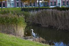 Floriade_251015_8 (Bellcaunion) Tags: park autumn fall nature zoetermeer rokkeveen florapark