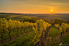 Rheinhessen im Herbst (Benedikt Filip) Tags: panorama sun nature sunrise germany landscape outside deutschland evening abend vineyard outdoor character laub herbst natur feld vineyards abroad alemania landschaft sonne sonnenaufgang allemagne hdr highdynamicrange germania sunup reben rundblick wein weinberg rheinlandpfalz rheinhessen rebe ドイツ weinberge weingarten afield rebberg nackenheim doitsu wingert rundsicht drausen ausen eventime rebhang dégúo 德國德国