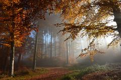 DSC_8663 ein traumhafter Herbstmorgen im Märchenwald - a dreamlike autumn morning in the fairy forest (baerli08ww) Tags: autumn light mist fog forest germany deutschland licht nebel herbst autumncolors wald morningsun rheinlandpfalz morgensonne westerwald herbstfarben rhinelandpalatinate westerforest