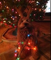 jack-helping-with-the-lights-_11367385866_o